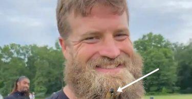 Cicadas Makes Home in Washington's Ryan Fitzpatrick's Beard